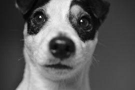 Тест на знание фильмов о животных