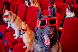 Тест на знание фильмов про собак